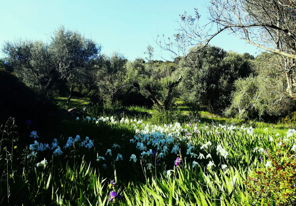 Trizonia island in spring is full of beautiful flowers