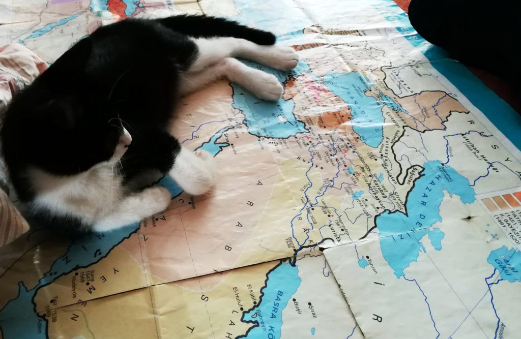 A cat reclines on a map of the Ottoman Empire at its apex, in Mimar Sinan's Sehzade Mosque