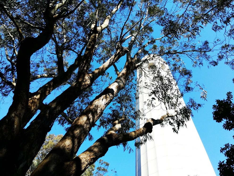 5 Days in San Francisco - Coit Tower