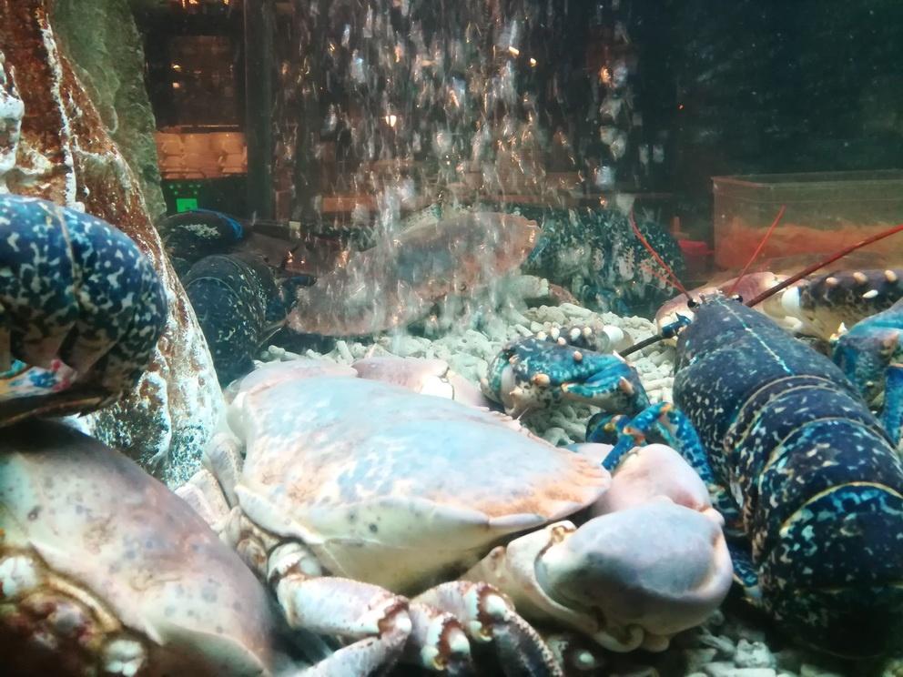 Time Out Market Lisbon - The Freshest of Shellfish