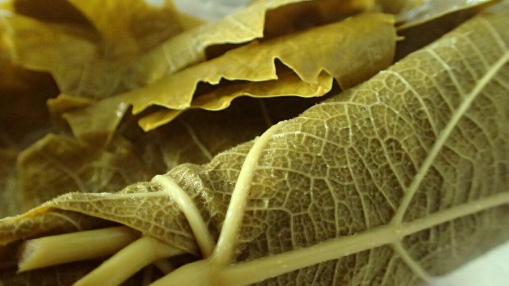 A roll of vine leaves from the jar for making dolmadakia gialantzi - stuffed grape leaves